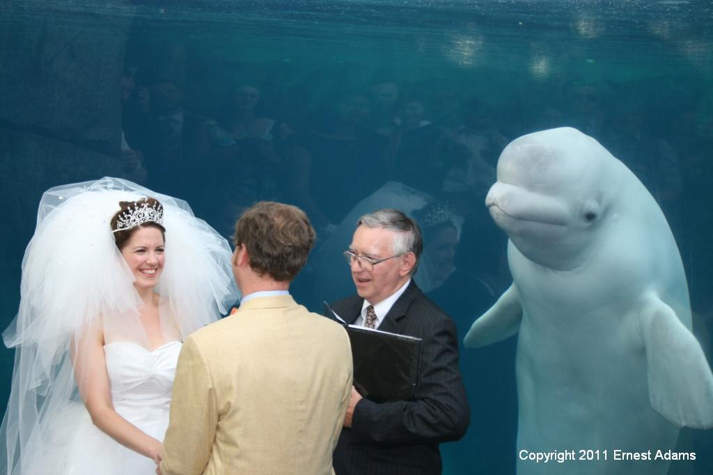 Свадьба в океанариуме – очень ярко и красиво!