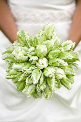 Тюльпаны для букета невесты