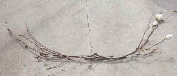 fotostena-na-svadbu-iz-magnolii-5 Мастер класс: фотостена для свадебной фотосессии из магнолии