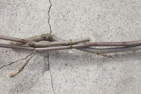 fotostena-na-svadbu-iz-magnolii-6 Мастер класс: фотостена для свадебной фотосессии из магнолии