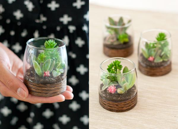 sukkulenty-v-podarok-gostyam-1 Мастер класс: растения в стакане в подарок гостям