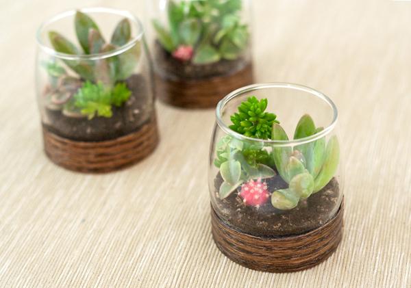 sukkulenty-v-podarok-gostyam-2 Мастер класс: растения в стакане в подарок гостям