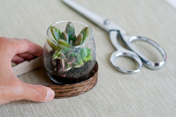 sukkulenty-v-podarok-gostyam-3 Мастер класс: растения в стакане в подарок гостям