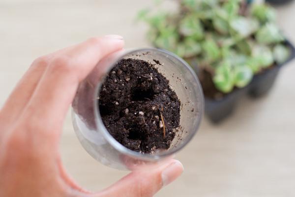 sukkulenty-v-podarok-gostyam-9 Мастер класс: растения в стакане в подарок гостям