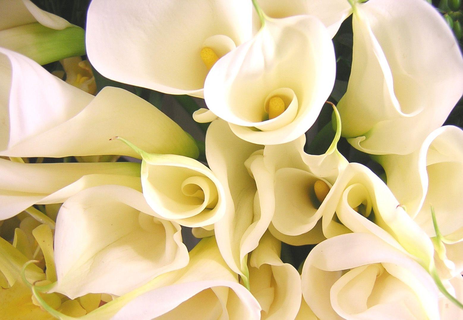 belye-cvety11 Свадебный букет для невесты из калл