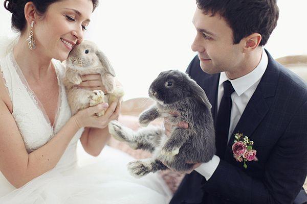 Fotopodborka-zhivotnye-na-svadbe1 Фотоподборка: животные на свадьбе