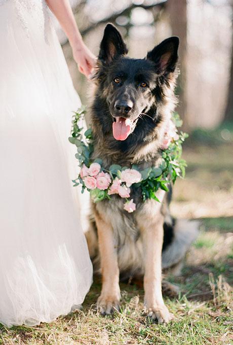 Fotopodborka-zhivotnye-na-svadbe5 Фотоподборка: животные на свадьбе