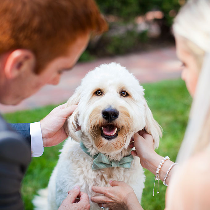 Fotopodborka-zhivotnye-na-svadbe6 Фотоподборка: животные на свадьбе