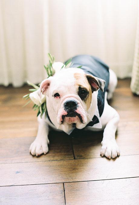 Fotopodborka-zhivotnye-na-svadbe9 Фотоподборка: животные на свадьбе