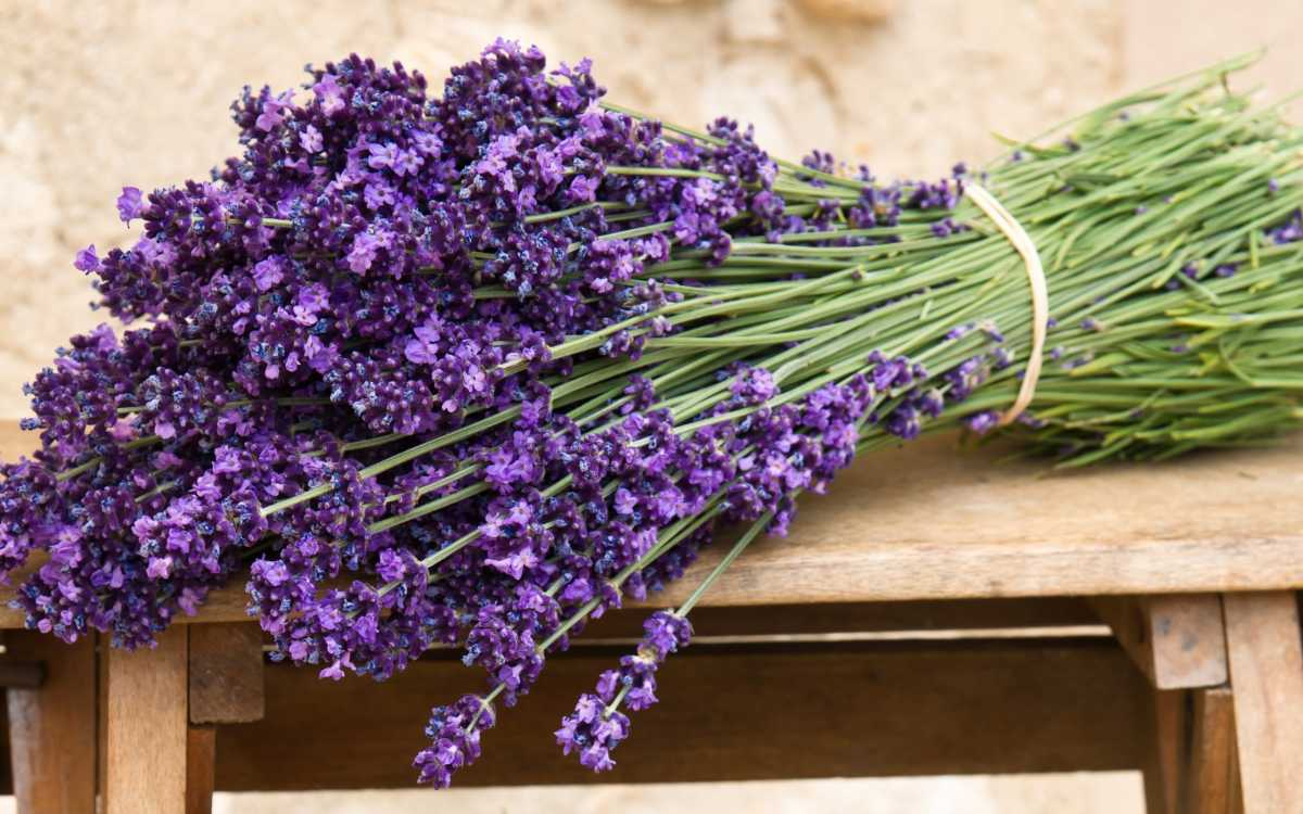 Nature___Flowers_____A_bouquet_of_lavender_on_the_bench_086719_19 Свадебный букет с лавандой