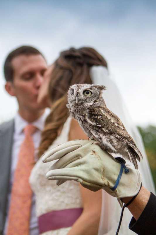 sovy-na-svadebnoj-fotosesii Удивительная свадебная фотосессия с живыми совами