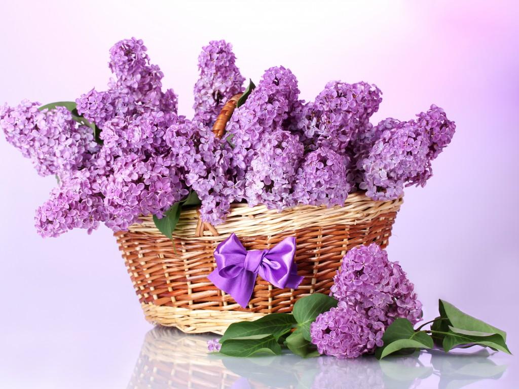 kakie-tsvety-podarit-molodozhenam Выбираем цветы в подарок молодоженам на свадьбу