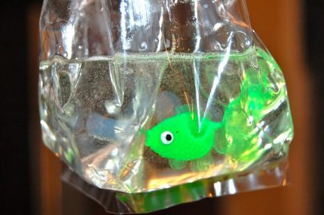 """zolotaya-rybka-v-podarok-gostyam-na-svadbu-6 """"Золотая рыбка"""" в подарок гостям на свадьбу - простой способ удивить гостей презентом в стиле хендмейд"""